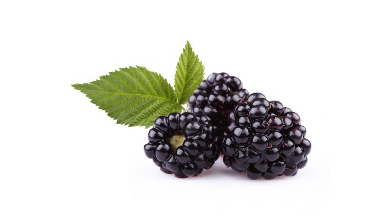 Blackberry BERRIES