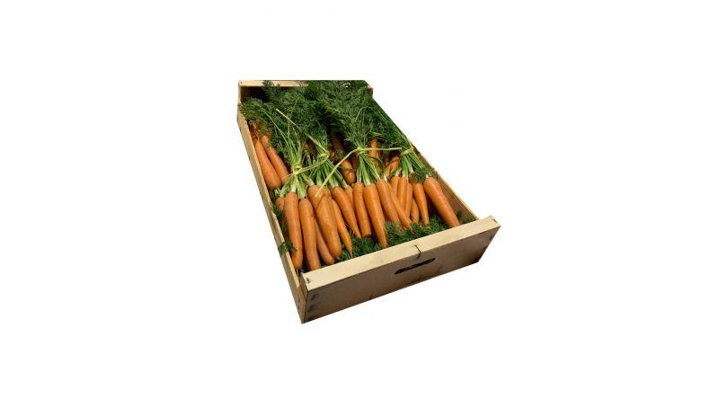 Fresh Carrots VEGETABLES