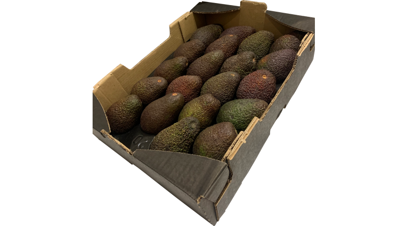 Avocado EXOTIC FRUITS