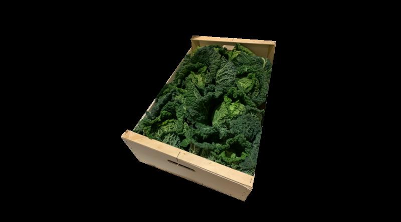 Savoy Cabbage VEGETABLES