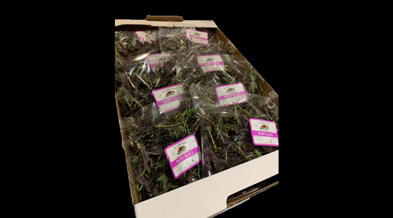 Baby Kale Box - 8 125g Per Box