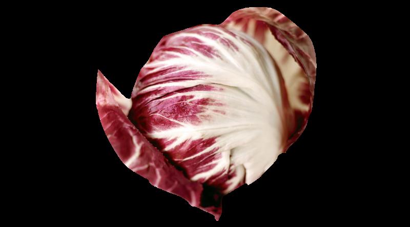 Radico lettuce