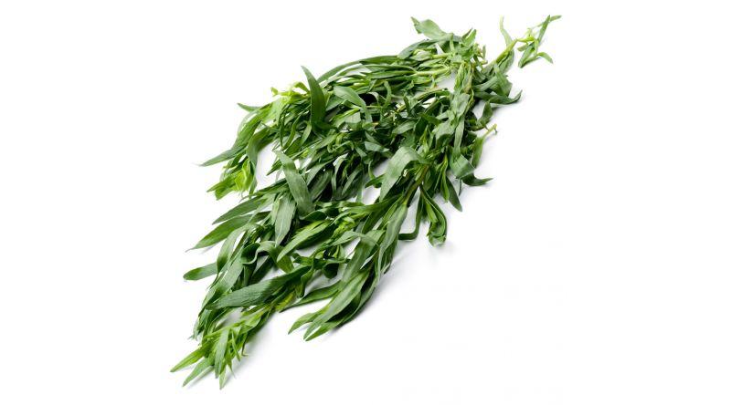 Fresh Tarragon Herbs