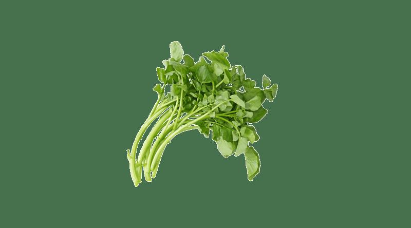Fresh Water Cress Salad
