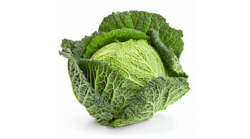Savoy Cabbage VEGETABLES