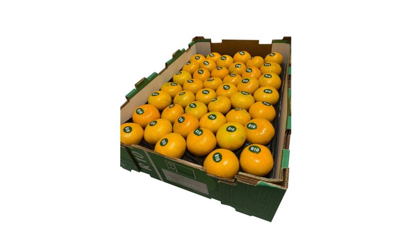 Fresh Seedless  satsuma